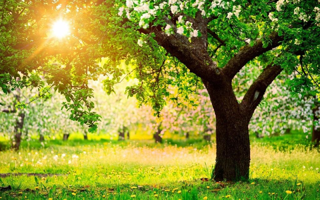 Giornata degli alberi: collaborazione con Legambiente, per bilancio arboreo