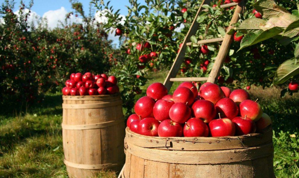 AGOSTINELLI: Con l'attivazione del pegno rotativo, finanziamenti più agevoli per le imprese agricole