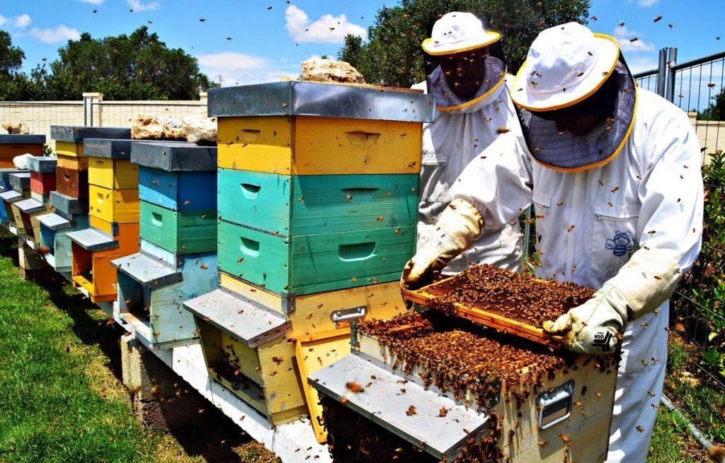 La regione Marche godrà di 323 mila euro per l'apicoltura