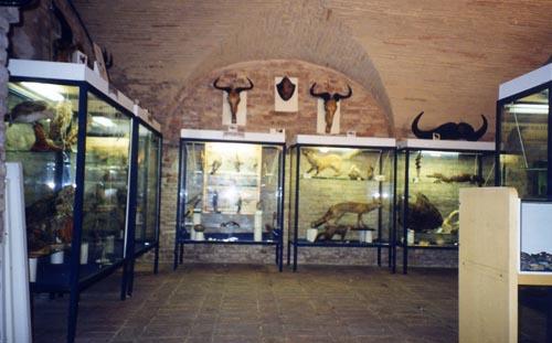 """Da Museo di storia naturale a Museo di Biodiversità e storia Naturale approvato il progetto di allestimento, ora la proposta partecipa al bando previsto dal """"Fondo cultura"""""""