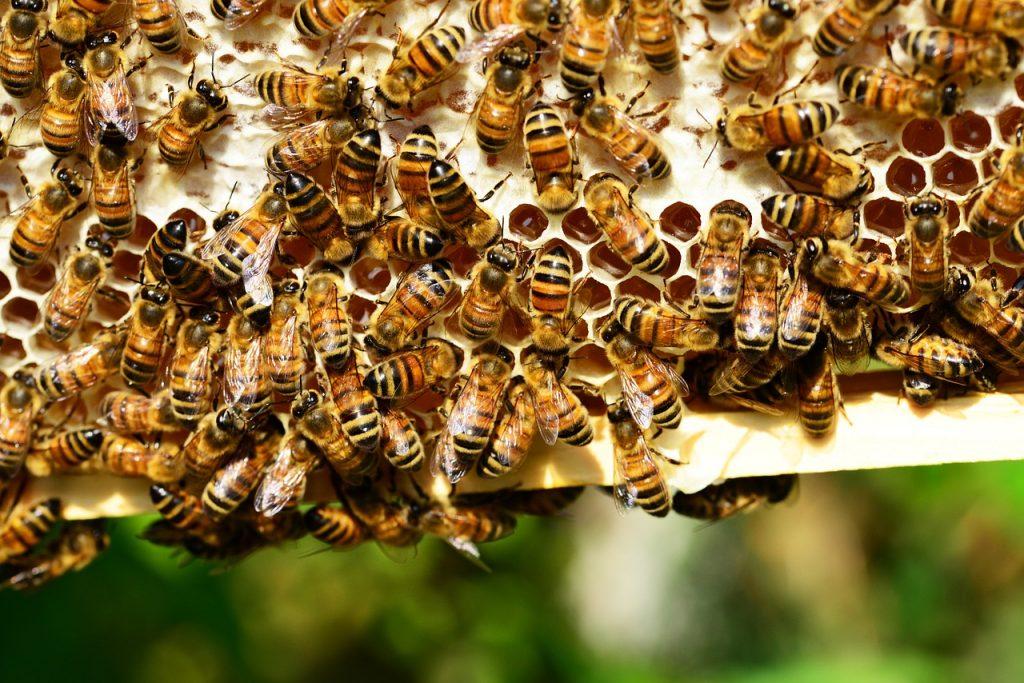 """Il meteo mette alle corde anche le api, Coldiretti Marche: """"Produzione in calo, servono misure a sostegno per proteggere il miele italiano"""""""
